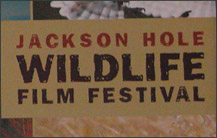 jackson hole wildlife film festival